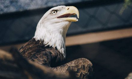 Eagles Across United States Shocked at What They Now Stand For